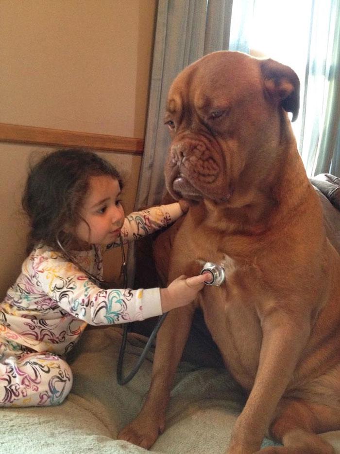 犬,こども,癒し,画像,まとめ015