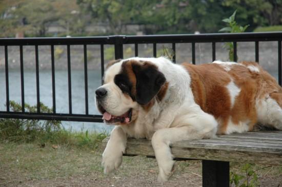 悶絶,可愛い,大型犬,画像,まとめ015