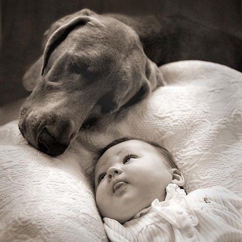 子供,大好き,癒される,子守犬,画像,まとめ015