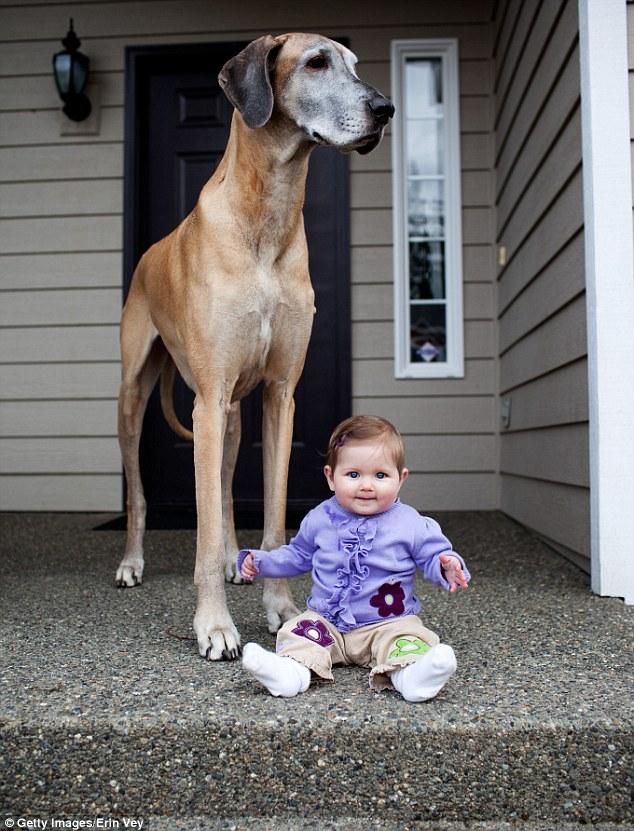 犬,こども,癒し,画像,まとめ016