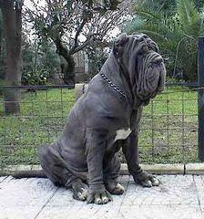 悶絶,可愛い,大型犬,画像,まとめ017