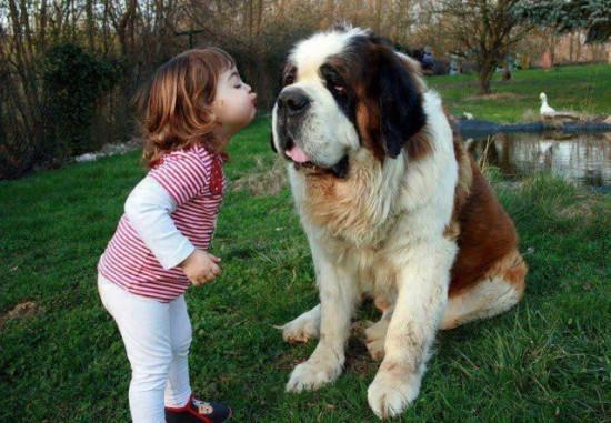 犬,こども,癒し,画像,まとめ020