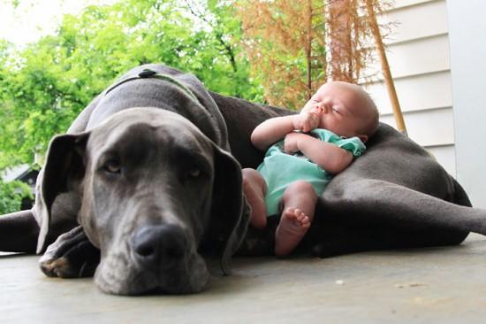 犬,こども,癒し,画像,まとめ022