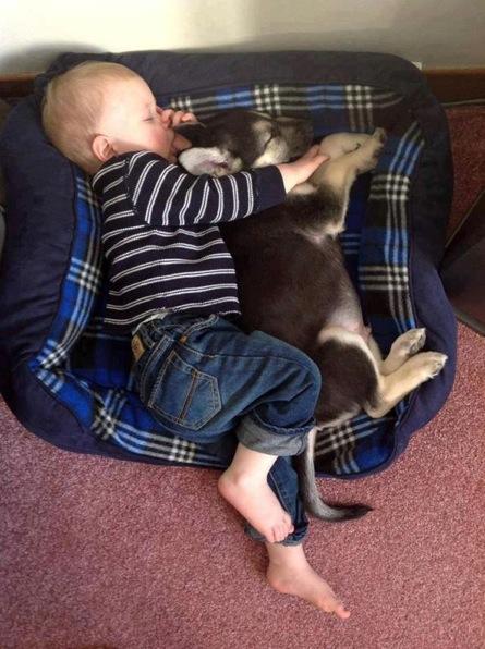 犬,こども,癒し,画像,まとめ023