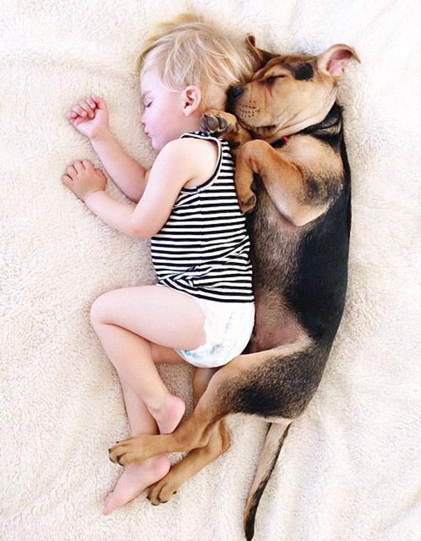 犬,こども,癒し,画像,まとめ025