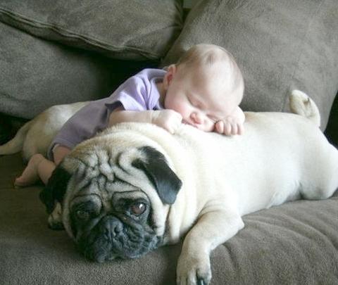 犬,こども,癒し,画像,まとめ028