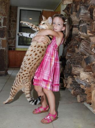 超巨大,デブ猫,画像,まとめ002