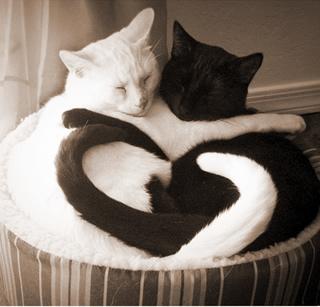 可愛過ぎる,黒猫,画像,まとめ002