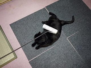 コロコロ,猫,ネコ,画像,まとめ003