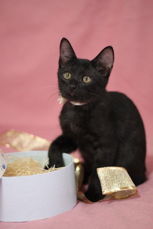 可愛過ぎる,黒猫,画像,まとめ003