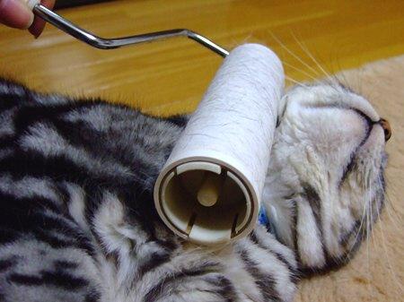 コロコロ,猫,ネコ,画像,まとめ004