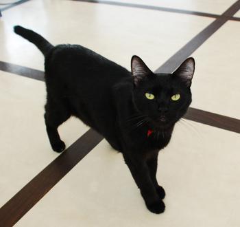 可愛過ぎる,黒猫,画像,まとめ004