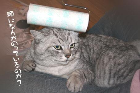 コロコロ,猫,ネコ,画像,まとめ005