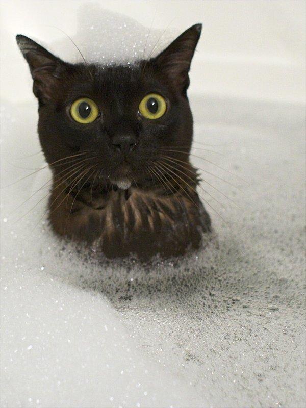 猫,風呂,癒し,画像,まとめ005