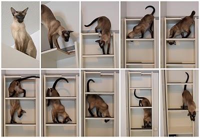 猫,自作,家具,画像,まとめ005