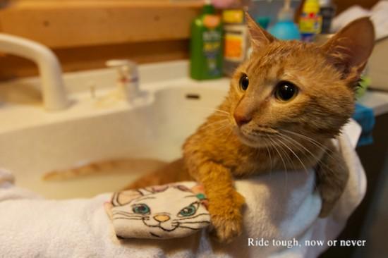 猫,風呂,癒し,画像,まとめ006