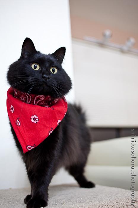 可愛過ぎる,黒猫,画像,まとめ006