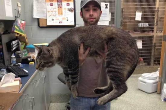 超巨大,デブ猫,画像,まとめ007