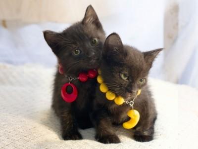 可愛過ぎる,黒猫,画像,まとめ007