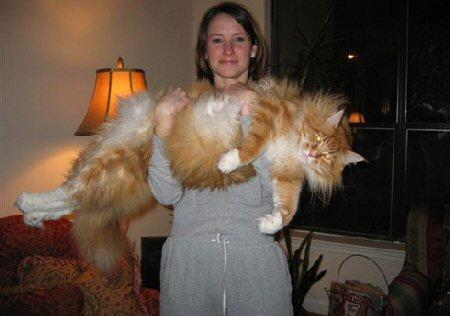 超巨大,デブ猫,画像,まとめ008