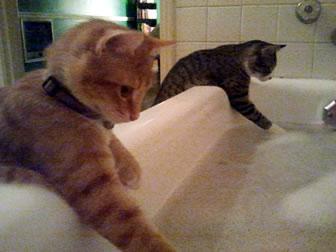 猫,風呂,癒し,画像,まとめ009