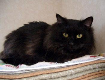可愛過ぎる,黒猫,画像,まとめ010