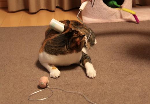 コロコロ,猫,ネコ,画像,まとめ011