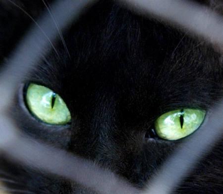 可愛過ぎる,黒猫,画像,まとめ014