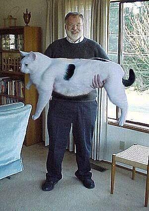 超巨大,デブ猫,画像,まとめ015