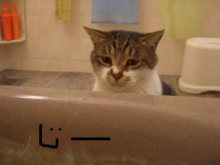 猫,風呂,癒し,画像,まとめ016