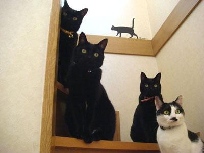 可愛過ぎる,黒猫,画像,まとめ016