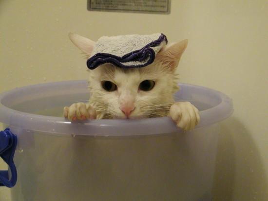猫,風呂,癒し,画像,まとめ019