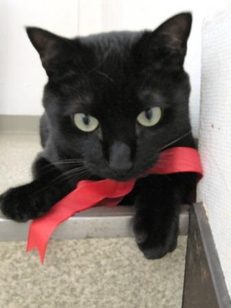 可愛過ぎる,黒猫,画像,まとめ020