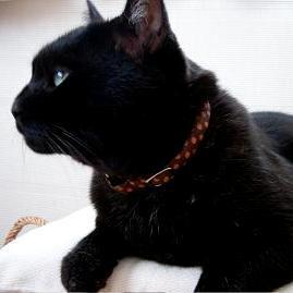 可愛過ぎる,黒猫,画像,まとめ022