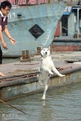 犬,おもしろ,ネタ,画像,まとめ007