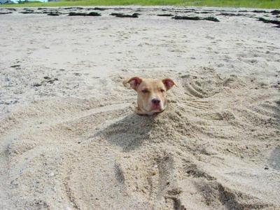 犬,おもしろ,ネタ,画像,まとめ014