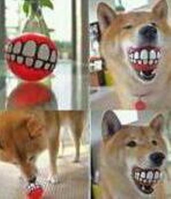 犬,おもしろ,ネタ,画像,まとめ041