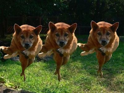 犬,おもしろ,ネタ,画像,まとめ047