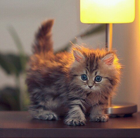 可愛過ぎる,猫,画像,まとめ010