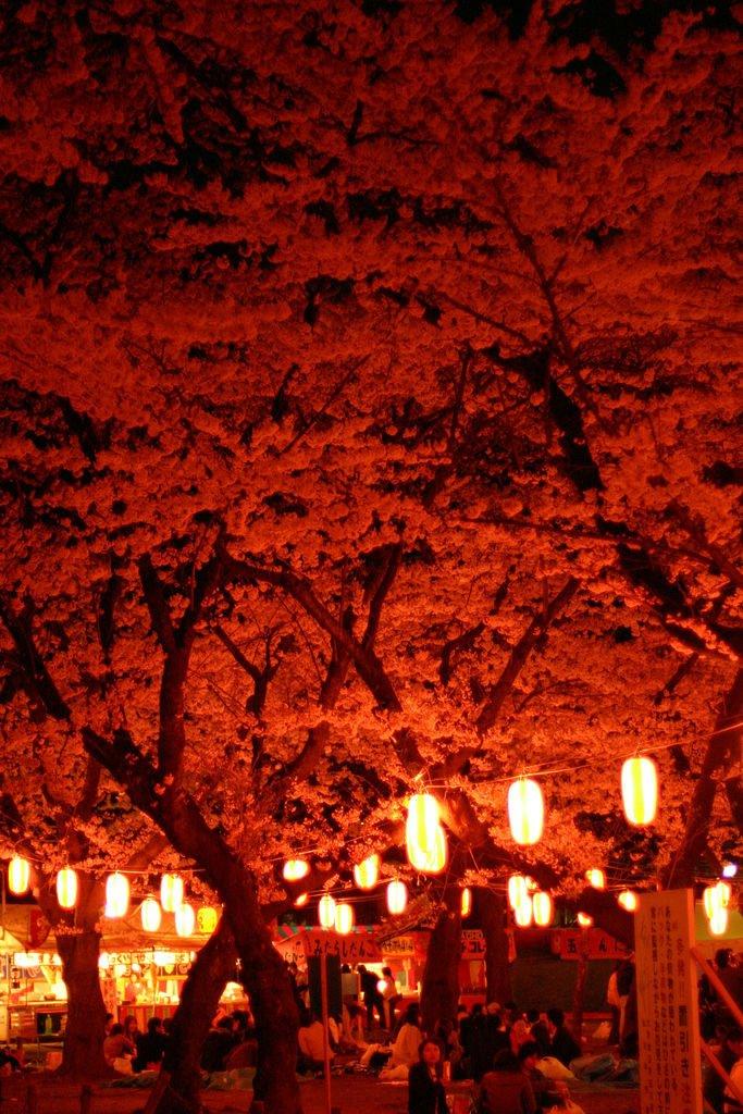 日本,美しさ,和,画像,まとめ023