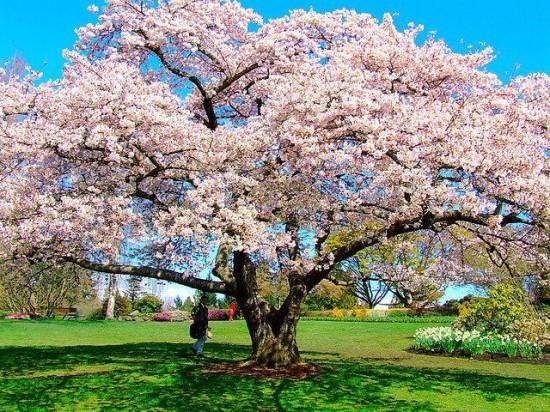 日本,美しさ,和,画像,まとめ031