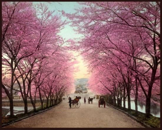 日本,美しさ,和,画像,まとめ033