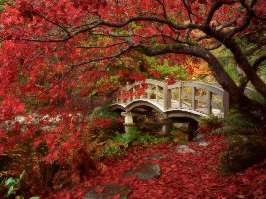 日本,美しさ,和,画像,まとめ035