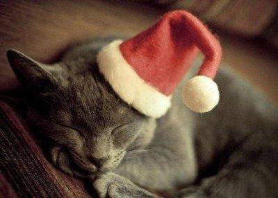 ロマンチック,クリスマス,画像,まとめ037