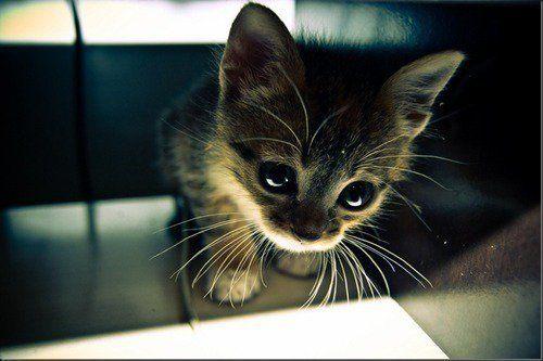 可愛過ぎる,猫,画像,まとめ064