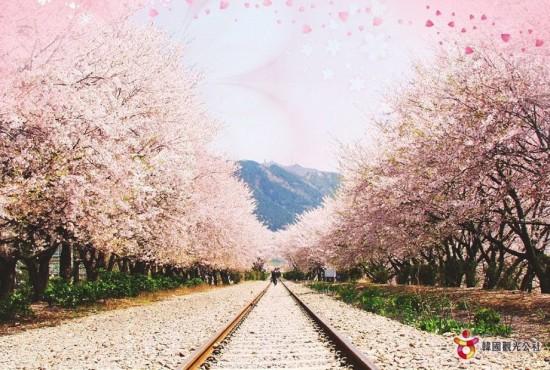 日本,美しさ,和,画像,まとめ068
