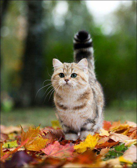 可愛過ぎる,猫,画像,まとめ068