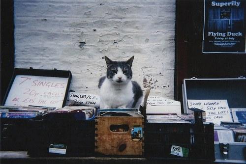 可愛過ぎる,猫,画像,まとめ091