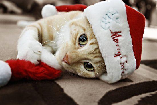 ロマンチック,クリスマス,画像,まとめ092