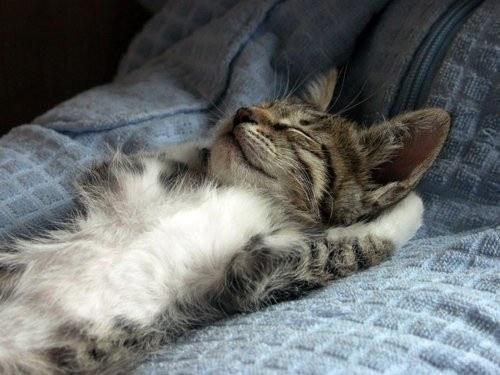 可愛過ぎる,猫,画像,まとめ096